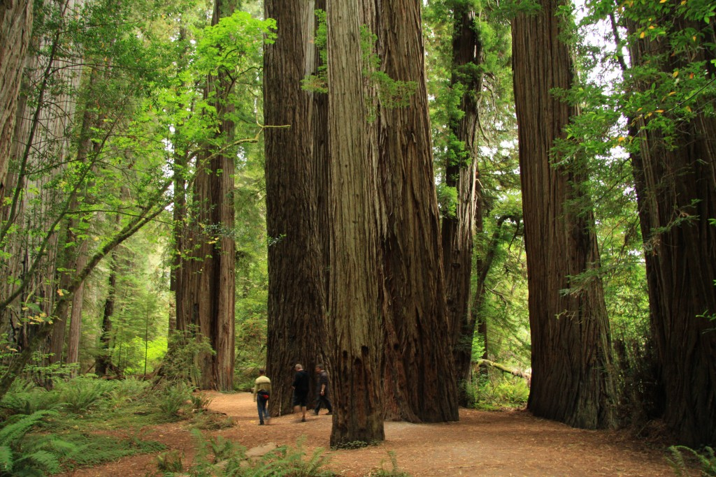 Jedediah_Smith_Redwoods_State_Park_in_2011_(22)